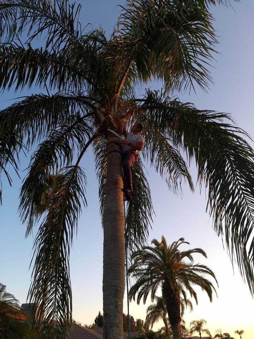 palm climb.jpg